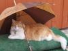 002Schahpour-parapluie