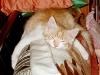 005Schahpour_nap_2002-01