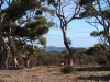 dolmen-trees-lagoon-prospecthill