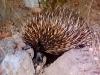 0132002-02-wildlife-01