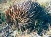 0142002-09-wildlife-03