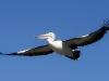 0152001-12-wildlife-01