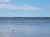 018AR-heron-swans