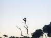 0212000-02-wildlife-01